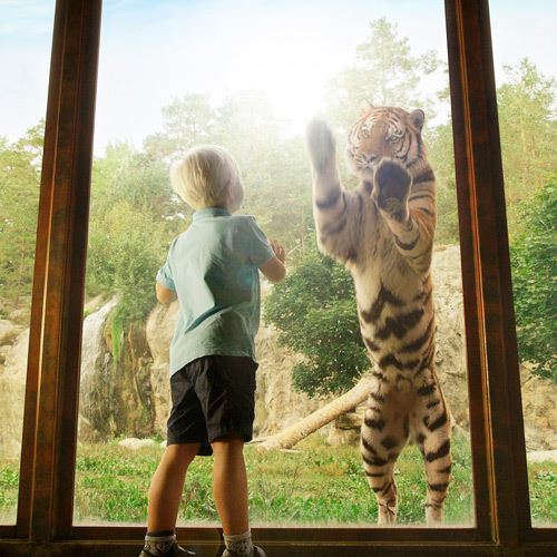 Kolmården Wildlife Park Package, 1 day